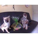Valores de Daycare Cachorro em Catumbi