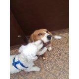 Valores do Adestramento de Cães no Sítio da Figueira
