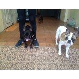 Valores Hospedagem Canina no Jardim Bela Vista