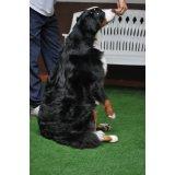 Valores Hotéis para Cães no Jardim do Estádio