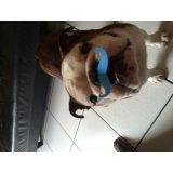 Valores Serviço de Adestrador de Cães no Pacaembu