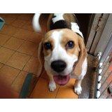 Valores Serviço de Adestramentos de Cachorro no Parque Capuava
