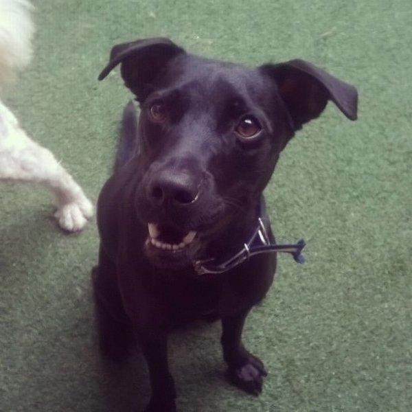 Valor Adestrador Canino no Parque São Jorge - Adestrador de Cães em São Caetano