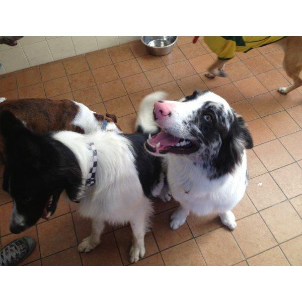 Valor da Hospedagem Canina no Jardim do Carmo - Hotel para Cães no Bairro Campestre