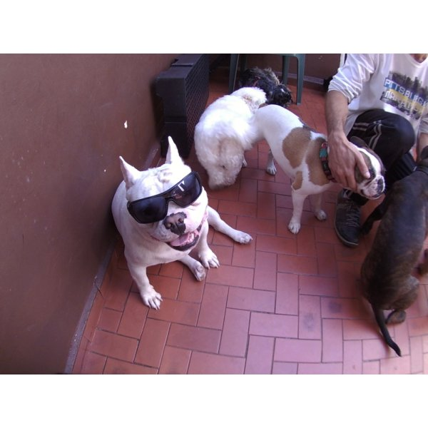 Valor Daycare Pet na Vila Romana - Daycare Dogs