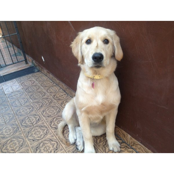 Valor de Hospedagem Canina no Jardim Hanna - Hotel Canil