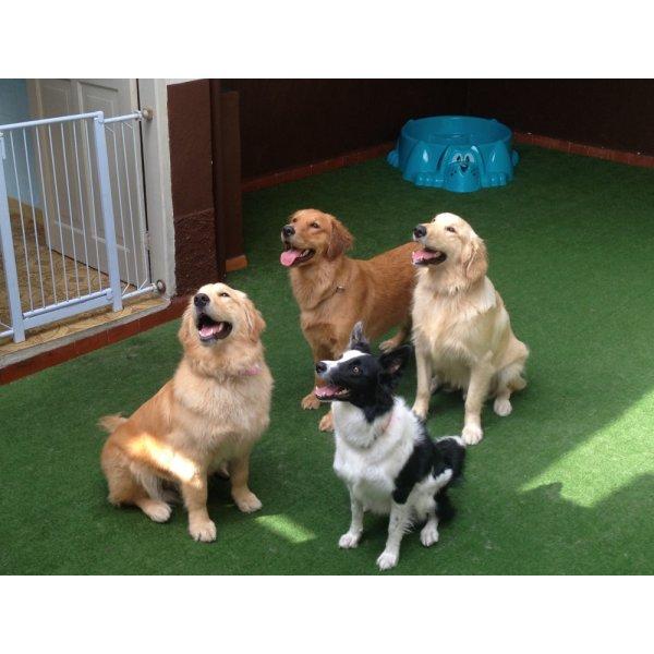 Valor Hotéis para Cães no Jardim Ocara - Hotelzinho para Cachorro