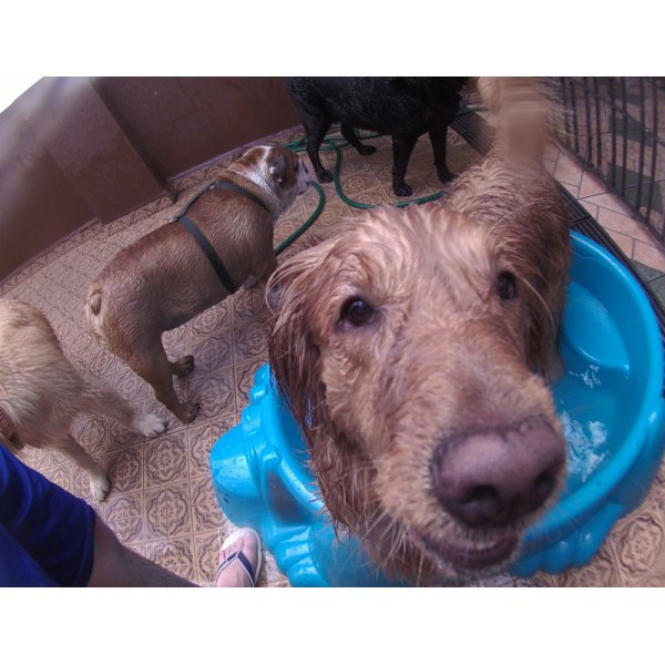 Valor Serviço de Daycare Canino na Vila Bertioga - Daycare Dogs