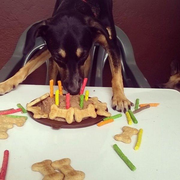 Valores Adestrador de Cachorros no Jardim Santo Amaro - Adestrador de Cães no Bairro Olímpico