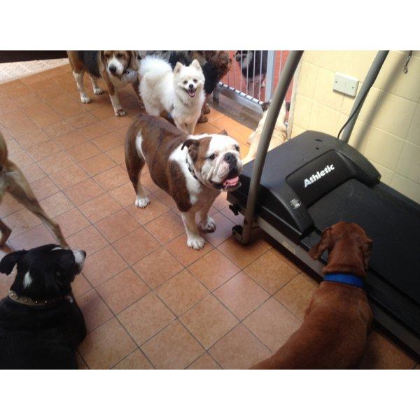 Valores Adestramentos de Cachorro em Independência - Adestramento de Filhotes