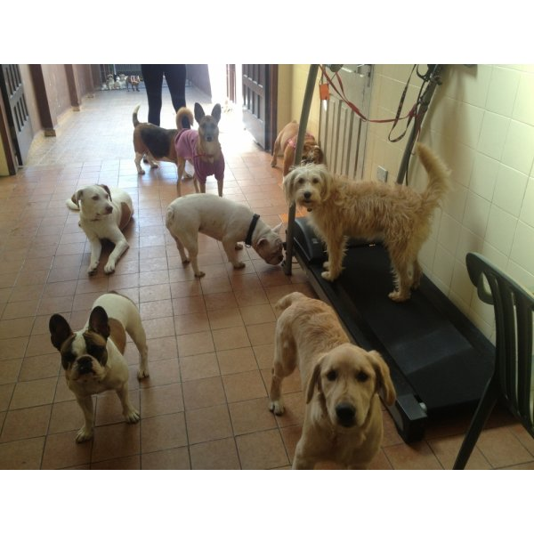Valores da Hospedagem Canina na Vila Almeida - Hotel para Cães em São Caetano