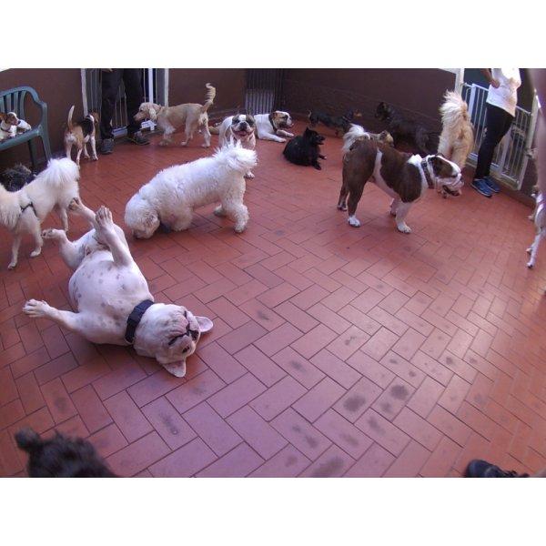 Valores Daycare Pet em São Bernado do Campo - Daycare para Cães