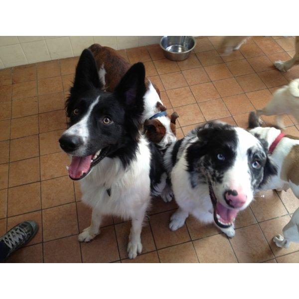 Valores de Hospedagem Canina na Vila Glória - Hotel para Cães no Bairro Campestre