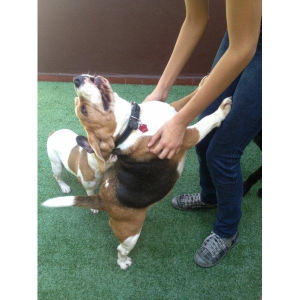 Valores de Hotel Dog na Vila Anchieta - Hotelzinho de Cães