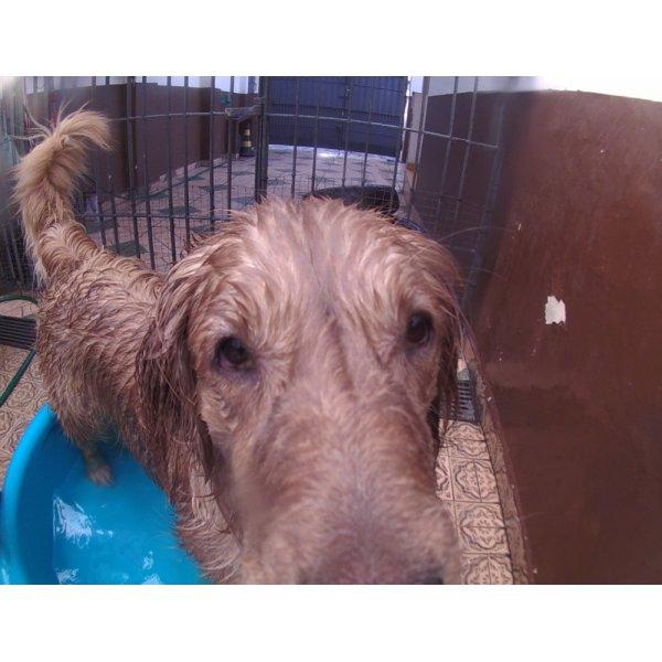 Valores de Serviço de Daycare Canino na Vila Paulina - Serviço de Daycare para Cachorros