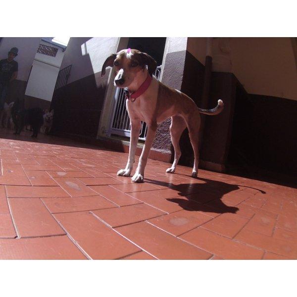 Valores de Serviços de Daycare Canino no Parque Capuava - Day Care para Cães