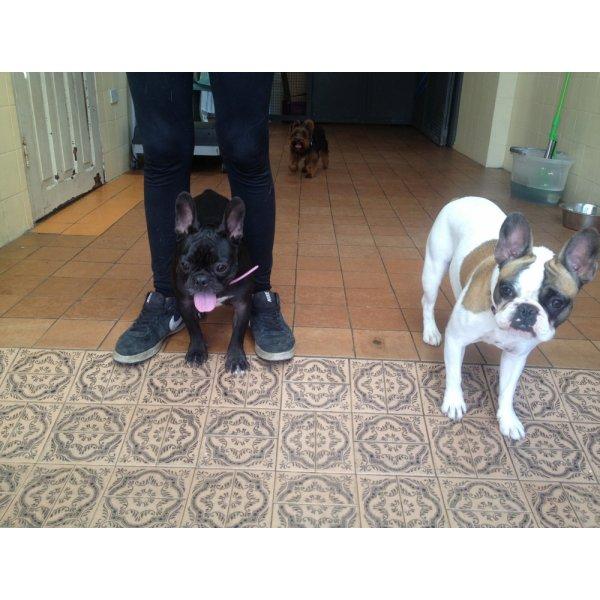 Valores Hospedagem Canina na Vila Facchini - Hotel para Cães no Bairro Campestre