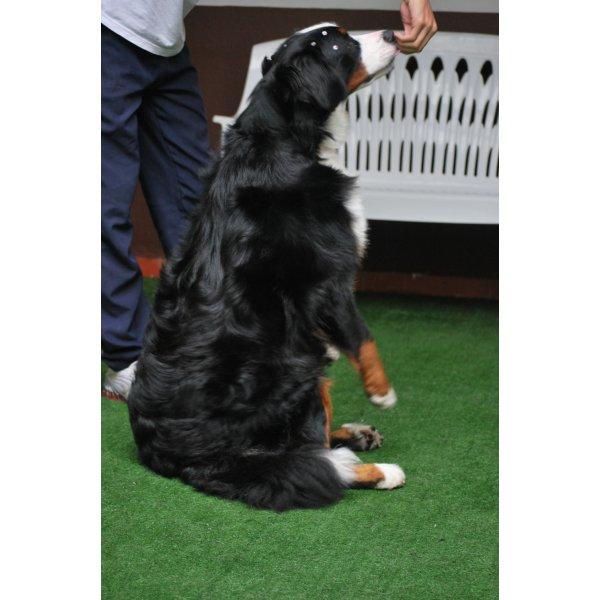 Valores Hotéis para Cães na Vila Clotilde - Hotel para Cães em Santo André